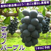 ご予約長野の新品種ぶどう皮ごと種なし黒ぶどうナガノパープル1kg2〜3房