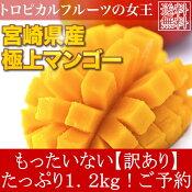 送料無料訳あり宮崎県産完熟アップルマンゴー宮崎マンゴー1.2kgご予約