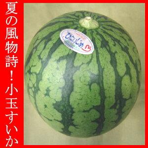 ≪フルーツセール≫小玉 すいか スイカ 西瓜 1玉