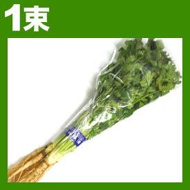 香菜 シャンツァイ コリアンダー パクチー 1束約100g