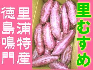 徳島鳴門里浦特産 なると金時 里むすめ 高糖度薩摩芋 サツマイモ 5kg