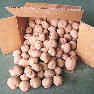 国産 じゃがいも ジャガイモ 馬鈴薯 1箱10kg