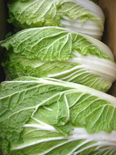 野菜食材の定番!おいしいおいしい白菜