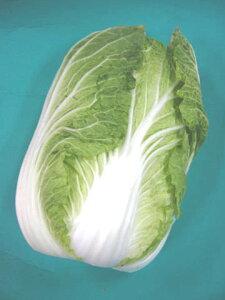 日常の一般野菜 はくさい 白菜 1玉