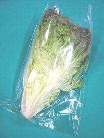 日常の一般野菜 サニーレタス 1株