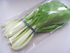 日常の一般野菜 しろな しろ菜 1袋