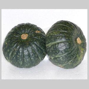 南瓜 かぼちゃ カボチャ 1箱10kg
