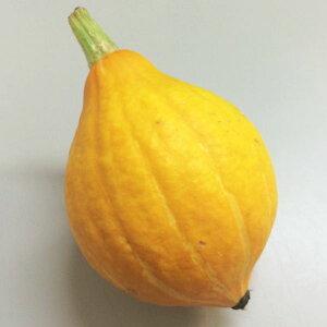 生食できる黄色いかぼちゃ 国産 コリンキー 1玉