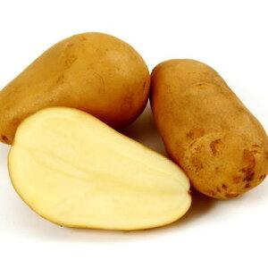 日常の一般野菜 じゃがいも ジャガイモ 馬鈴薯 メークイン 1kg