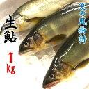 国産 生鮎 (あゆ) 1kg (10〜15尾入り) 主に岐阜県・愛知県産
