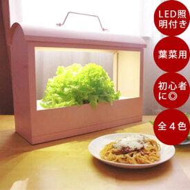 LED付き 水耕栽培 キット Akarina05/灯菜/アカリーナ 型番:OMA05 水耕栽培器 インテリア 間接照明 簡単 手軽 インドアグリーン おしゃれ ギフト プレゼント