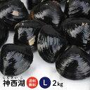【神西湖 しじみ Lサイズ2kg(2キロ)】島根県を代表するもう一つのしじみ産地、神西湖の砂抜き冷凍しじみ(シジミ)L…