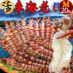 えび 車海老《おうち時間グルメ》活車えび[20尾入] [予約販売] 車エビ 生 クルマエビの本場 熊本県天草 大矢野島の車海老 おおやのじま 養殖場 生き 活き車海老 獲れたて新鮮 おすすめ人