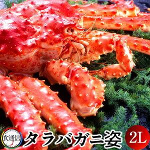 たらばがに ボイルたらばがに姿 1尾(2kg〜2.4kg)2L タラバガニ 本たらば 蟹姿【送料無料】