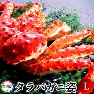 たらばがに ボイルたらばがに姿 1尾(1.5〜1.8kg)L タラバガニ 本たらば 蟹姿【送料無料】