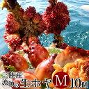 ほや 活ホヤ 中 10個 殻付き生ホヤ 朝どり漁師直送 三陸宮城県産 石巻 活き 天然ほや