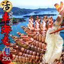 車海老 活車えび 250g(8-12尾)車エビ 生 クルマエビの本場 熊本県天草 養殖場直送 生き 獲れたて新鮮 おすすめ人気通販 産直 高級ギフ…