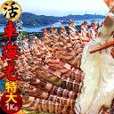 車海老 特大【2L】活車えび 1kg(24-28尾)車エビ 生 クルマエビの本場 熊本県天草 養殖場直送 生き 獲れたて新鮮 おす…