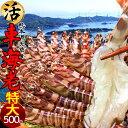 えび 車海老 特大【2L】活車えび 500g(12-14尾)車エビ 生 クルマエビの本場 熊本県天草 養殖場直送 生き 活き車海老 …