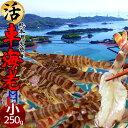 車海老【小】活車えび 250g(12-13尾)車エビ 生 クルマエビの本場 熊本県天草 養殖場直送 生き 獲れたて新鮮 おすすめ人気通販 産直 ギフト【送料無料】