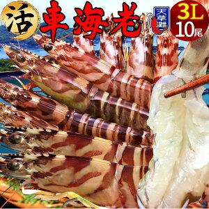 えび 車海老 超特大【3L】ジャイアント 活車えび[10尾入]車エビ 生 クルマエビの本場 熊本県天草 養殖場直送 生き 活き車海老 獲れたて新鮮 おすすめ人気通販 産直 高級ギフト【送料無料