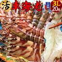 【新物予約販売】えび 車海老 超特大【3L】ジャイアント 活車えび[20尾入]車エビ 生 クルマエビの本場 熊本県天草 養殖場直送 生き …
