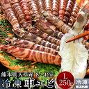 送料無料 車海老 活〆冷凍 天草 車えび 250g 熊本県産 獲れたて 生き活き 養殖場直送