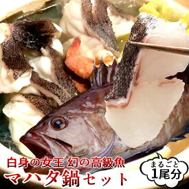 マハタ 鍋セット 三重県尾鷲産 活魚養殖場 幻の高級魚 白身魚の最高峰 まるごと1尾【送料無料】