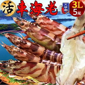 えび 車海老 超特大【3L】ジャイアント 活車えび[5尾入]車エビ 生 クルマエビの本場 熊本県天草 養殖場直送 生き 活き車海老 刺身 海老フライ 獲れたて新鮮 おすすめ人気通販 産直 高級ギ