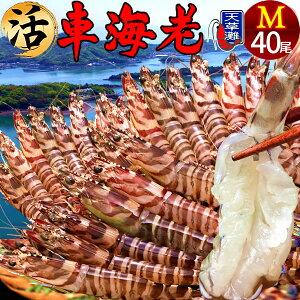 えび 車海老 活[40尾入][予約販売] 車エビ 生食 生 クルマエビの本場 熊本県天草 大矢野島の車海老 おおやのじま 養殖場 生き 活き車海老 獲れたて新鮮 おすすめ 人気通販 産地直送 高級 海