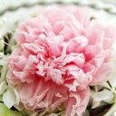 【即納】 プリザーブドフラワー Serena セレナ −C ライトピンク−
