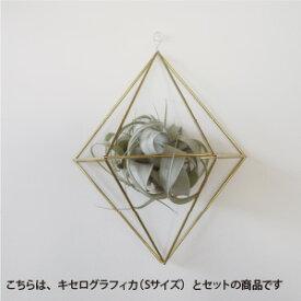 【手作りキット】壁掛けタイプの真鍮ヒンメリ(Lサイズ)とキセログラフィカのオーナメント※作り方付【まとめ買い割引きあり】