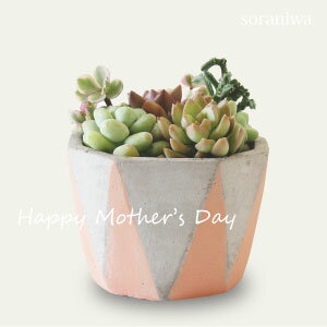 多肉植物の寄せ植えギフト(クリアBOX付) (母の日付近以外、GW前のお届けもお選びいただけます。)[お洒落な母の日ギフト][多肉植物][寄植え][アロエ][リプサス][インテリア]