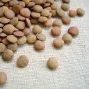 アメリカ産 レンズ豆【1kg】