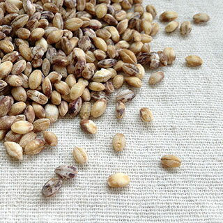 平成30年 国産(徳島県) もち麦(ダイシモチ)【1kg】