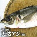 【スピード出荷】鳥取県産 天然アジ[生] 1匹(200g前後)【お刺身用♪】