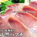 【スピード出荷】鳥取県産 天然ハマチ(ヒデリゴ)[生] 1匹(1.3kg程度)【お刺身・照り焼き♪】