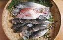 瀬戸内海産 冬の鮮魚セット(瀬戸内の天然活き鯛・めばる3尾・地あじ3尾・地さばもしくは代替えの魚)【smtb-KD】