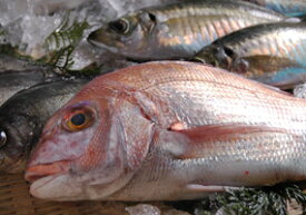送料無料 瀬戸内海産 の魚をメインに おまかせ 鮮魚セット 下処理 後、真空に近い状態にパック レシピ付き(お刺身 煮つけ 揚げ物 など)( 刺身セット 鮮魚 ボックス BOX 真空 生 魚 詰め合わせ )冷凍もご対応可能