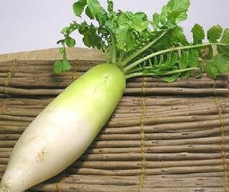 Organic farming or one natural agricultural methods Japanese radish
