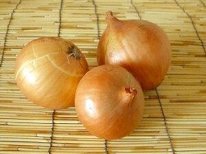 【西日本産または北海道産、中部地方産】有機又は自然農法 ( 無農薬野菜 )玉ねぎ 約1kg