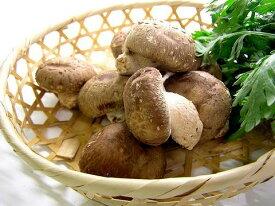 【中部地方産】生椎茸(生しいたけ) ※菌床栽培約100g ( 無農薬野菜 )