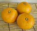 【★5/3以降発送】 自然農法(有機JAS)山下さんの甘夏みかん 約4.5kg(サイズ混合)※冷蔵配送