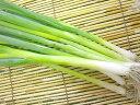 【西日本産(愛知県、他)】 有機、または特別栽培小ねぎ 1束※冷蔵配送推奨