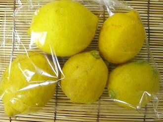 Approximately 500 g of organic lemons of 耕七郎 grandfather  ※Size mixture