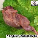 国産うずら (内臓有,腸無)5羽(90〜110g/羽)セットうずら 肉/ウズ...