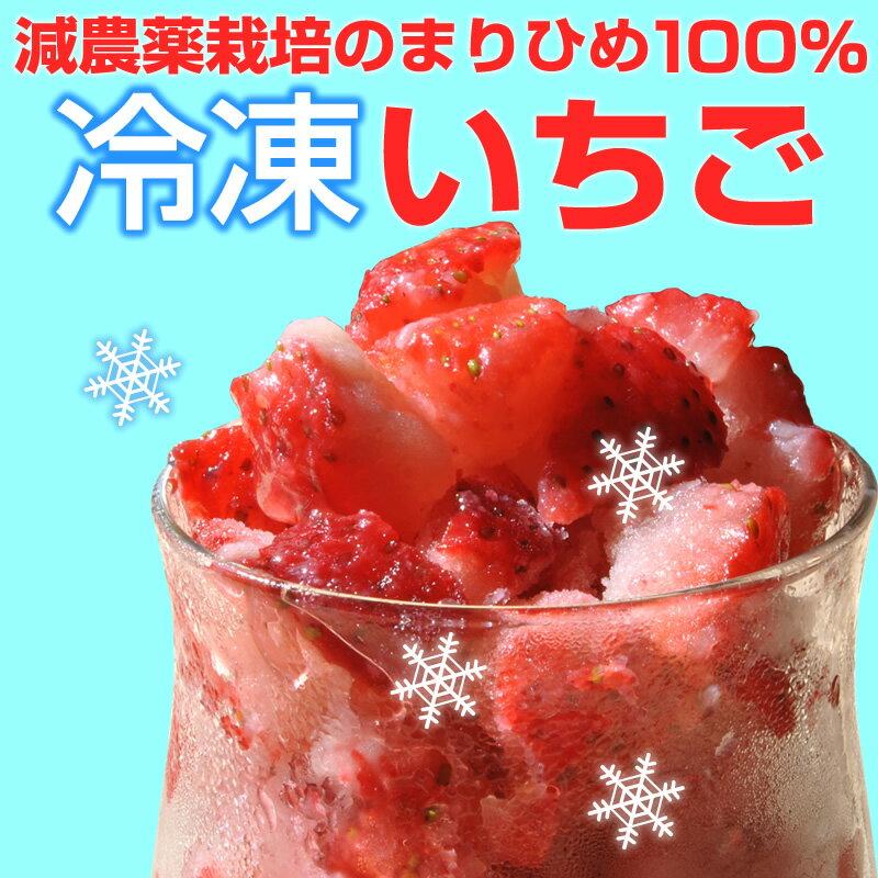 自宅でいちごアイスが作れる『冷凍いちご500g』【減農薬】【まりひめ】【有機栽培】【イチゴ】【手作り】【スムージー】【氷】【冷凍】【かき氷】