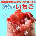 自宅でいちごアイスが作れる『冷凍いちご500g』【減農薬】【まりひめ】【有機栽培】【イチゴ】【手作り】【スムージー】【氷】【冷凍】【かき氷】【P20Aug16】