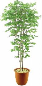観葉植物 大型 ピュアメイト ぶなの木 180cm 山崎産業 ED019-180X-MB