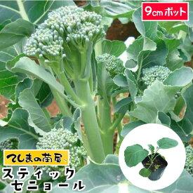 【てしまの苗】 茎ブロッコリー苗 スティックセニョール 9cmポット 葉菜苗 培土 種 【人気】